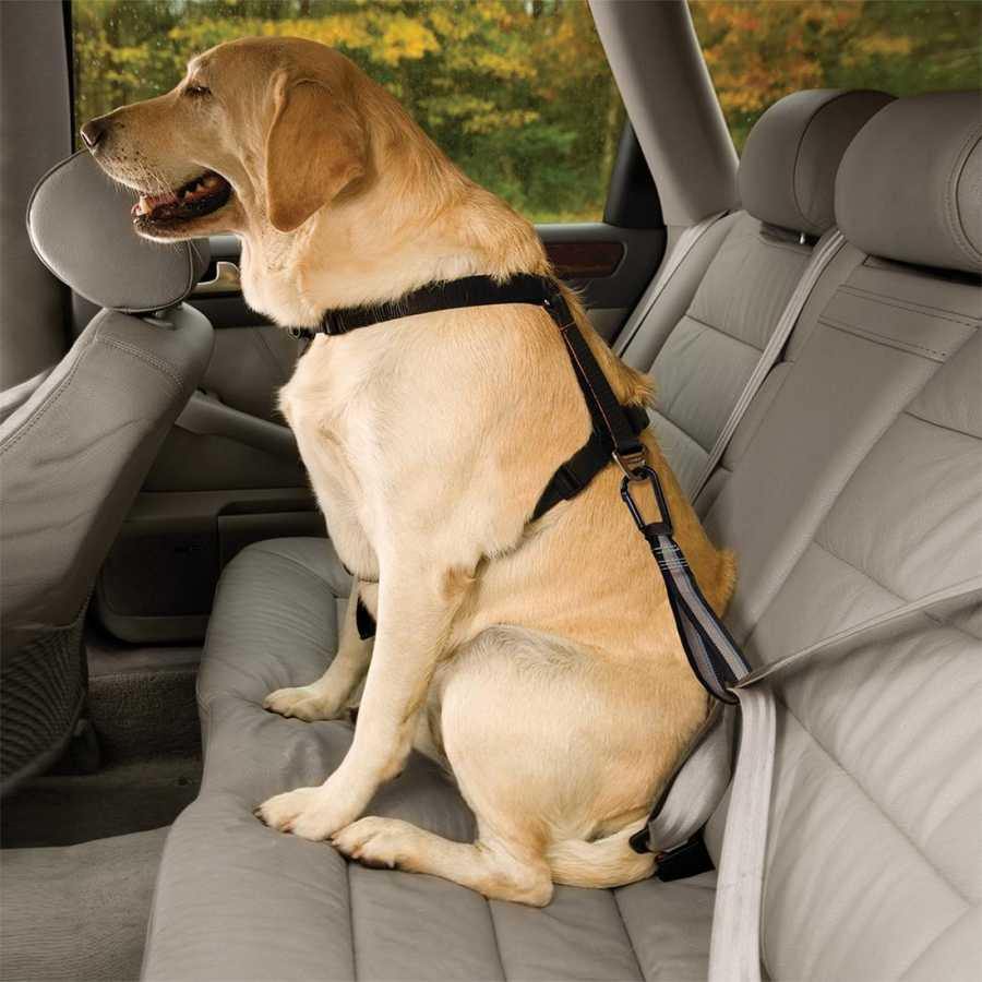 Pet Seat Belt >> Dog Seat Belt Loop Seatbelt Tether With Carabiner Cattitude