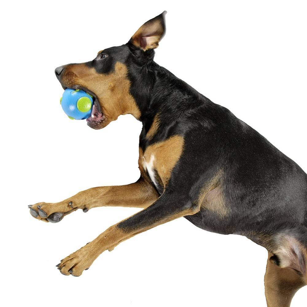 Planet Dog Orbee Lil/Big Pup Ball