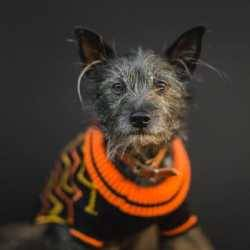 Hiro + Wolf Hoxton Dog Jumper