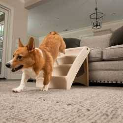 PetSafe® PupSTEP® + Plus