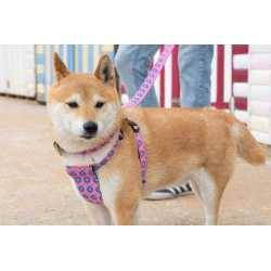 Hiro + Wolf Ham Câini Nebula