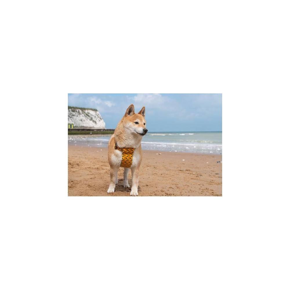 Hiro + Wolf Fireworks Dog Harness
