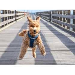 DOG Copenhagen Comfort Walk Pro ™ Ham Căței
