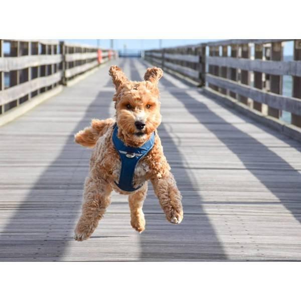 DOG Copenhagen Comfort Walk Pro™ Harness
