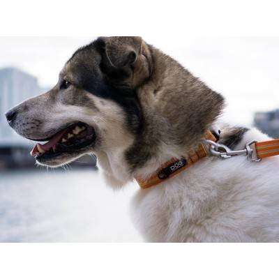 DOG Copenhagen Urban Style™ Collar