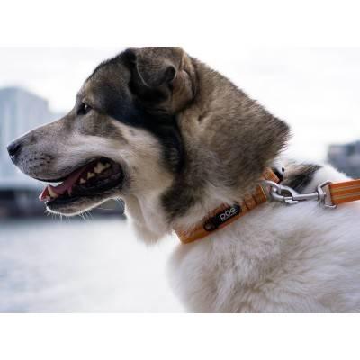 DOG Copenhagen Urban Style™ Zgardă Căței