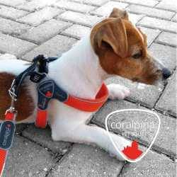CORALPINA CINQUETORRI SOFTY LINE. DOG HARNESS